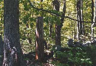 woods, Davis Park