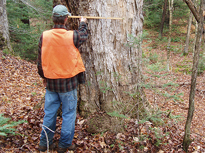 man measuring tree in the woods