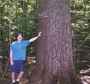 College Woods Paul Bunyan tree