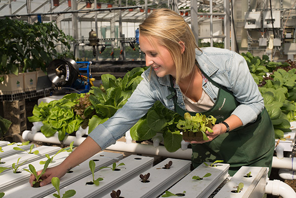 female student planting lettuce in a green house