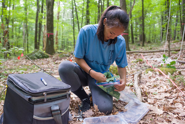 A female student collects leaf samples in the forest.