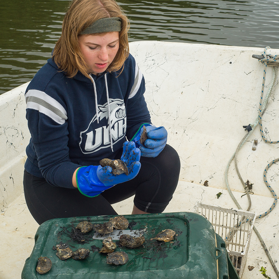 Student on a boat pulling mussels off of the open ocean aquaculture lines