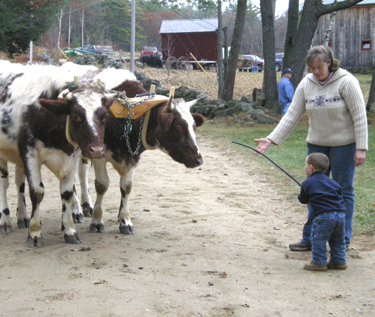Alyson Bronnenberg and child with oxen