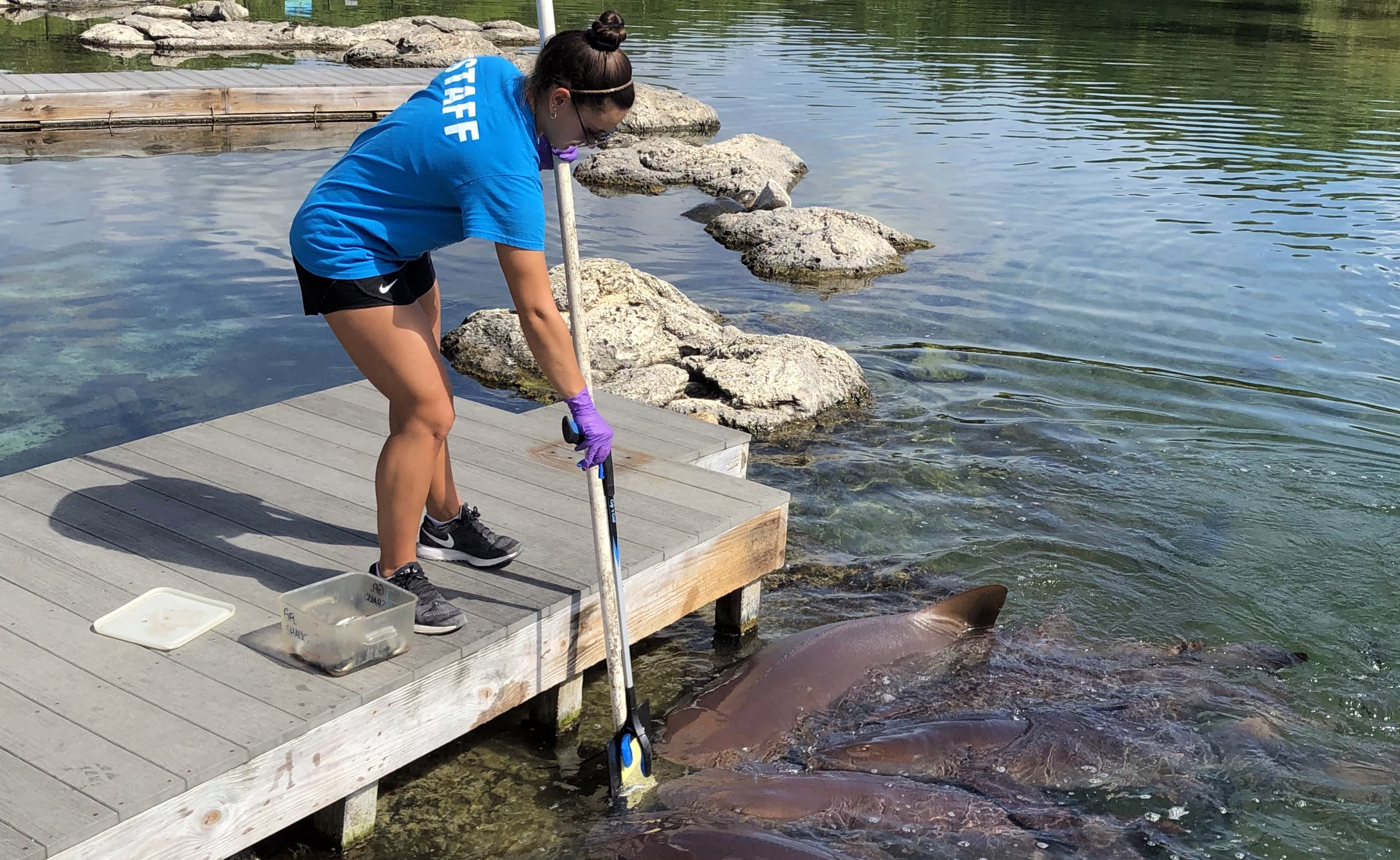 UNH marine, estuarine and freshwater biology major Marisa Gazzola cares for marine animals during her summer internship