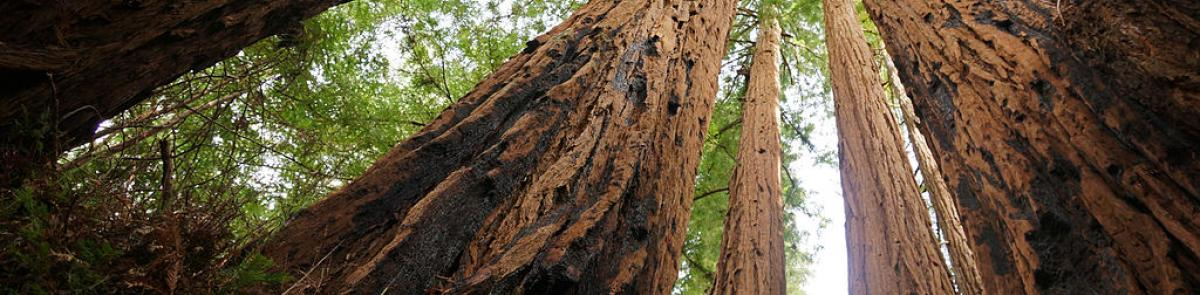 Natural Resources: Forestry