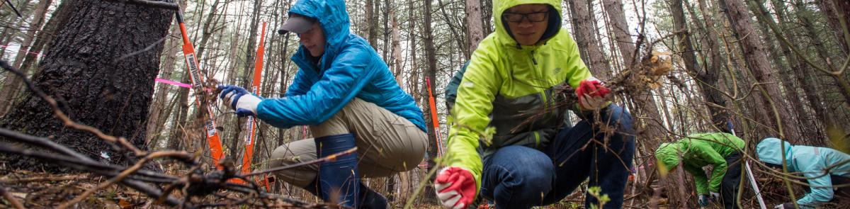 College woods earth day cleanup