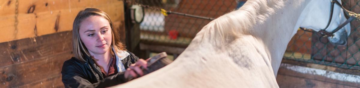 student brushing horse