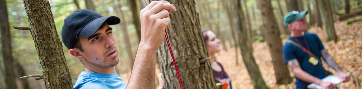 Thompson School students measuring trees in College Woods