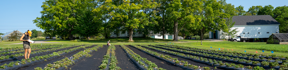 UNH Woodman Horticultural Research Farm