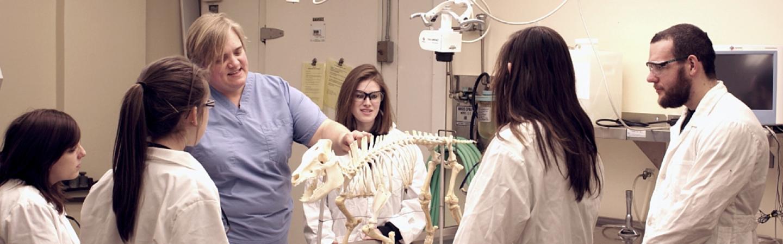 Pre-vet students look over an animal skeleton with professor Inga Sidor.