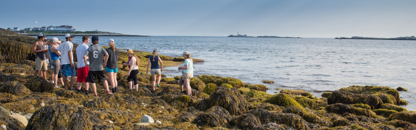 Students standing in the intertidal on Appledore Island