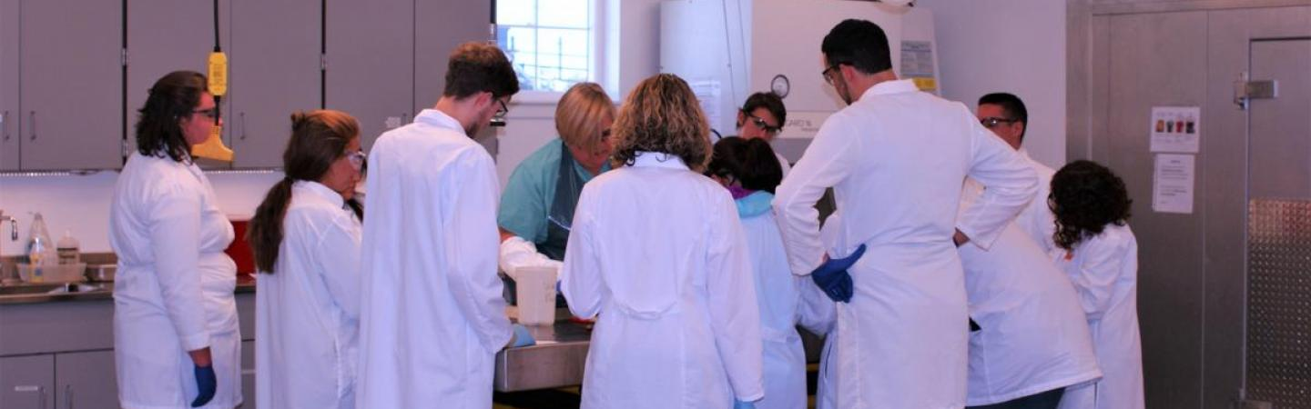 Students in a necropsy lab