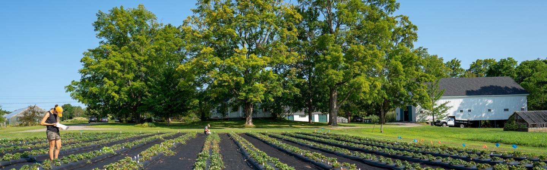 Wodman farm