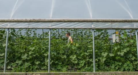 Studying Sustainability at the UNH College of Life Sciences and Agriculture