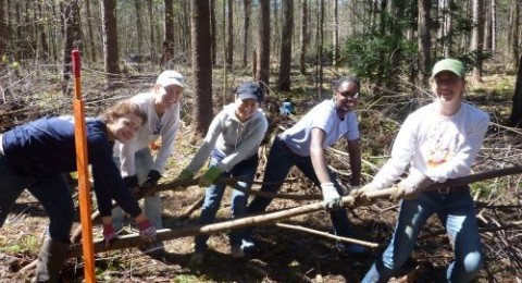 students clearing buckthorn in doe farm