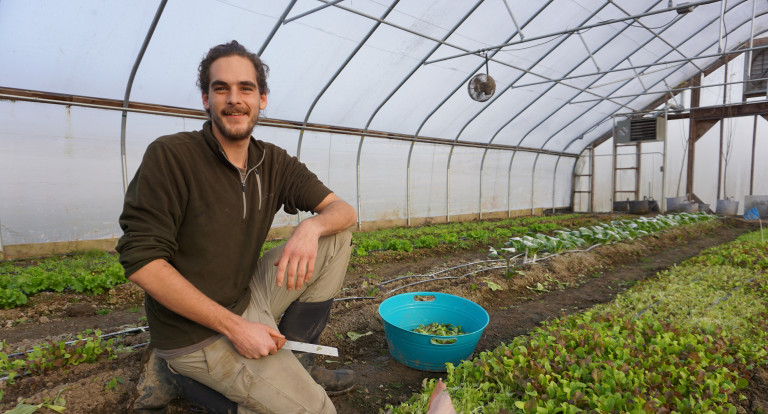 Peter Kane tends to lettuce in one of UNH's high tunnels