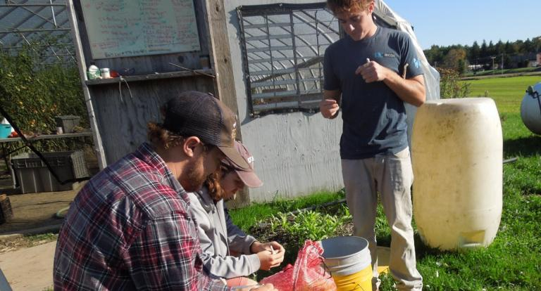 Students seated outside a high tunnel greenhouse gain experience in sustainable food production as they separate garlic cloves for consumption and planting.
