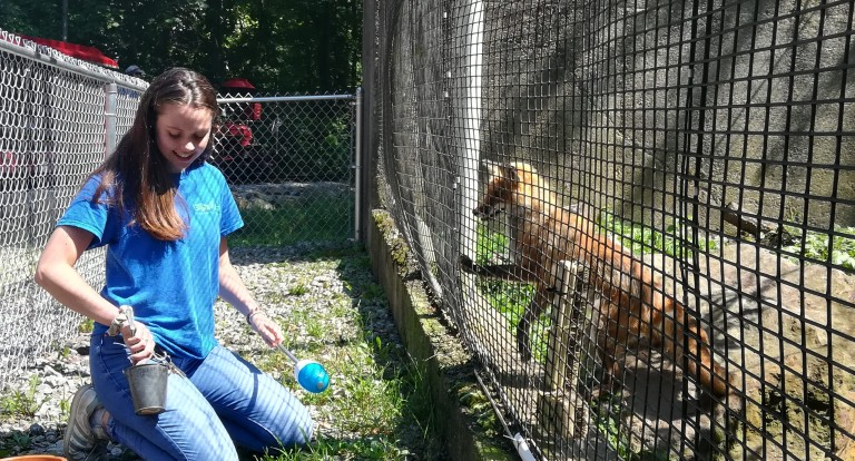 UNH student Abbie Molodetz '20 and Socks the red fox at the Ecotarium in Worchester, Massachuetts