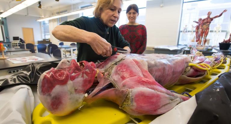 A view of the lifelike synthetic cadaver, Xena.
