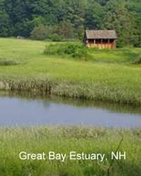 great bay estuary in nh
