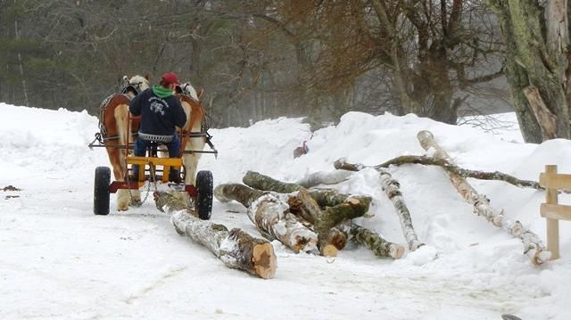 a team of horses pulling logs through the snow