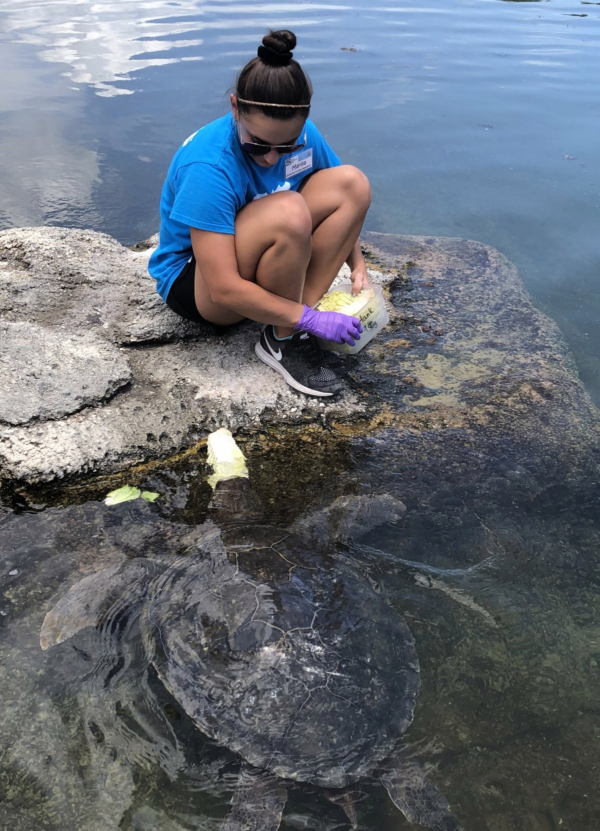 UNH student Marisa Gazzola interacts with a sea turtle during her summer internship in Florida